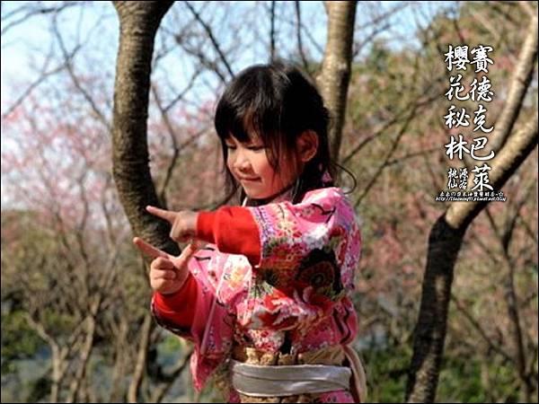 2012-0212-桃園-桃源仙谷-賽德克巴萊的櫻花秘林 (37).jpg
