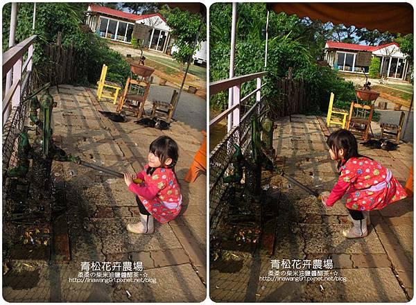2011-1122-桃園-青松花卉農場 (1)