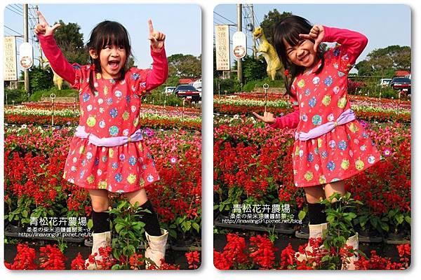 2011-1122-桃園-青松花卉農場 (2)