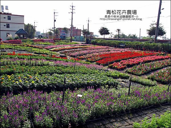 2011-1122-桃園-青松花卉農場 (16)