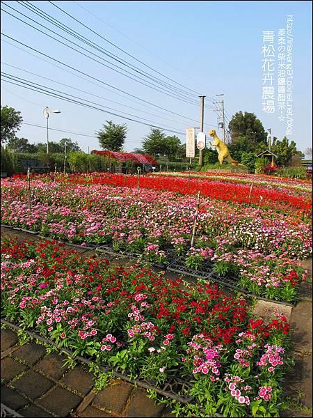 2011-1122-桃園-青松花卉農場 (17)