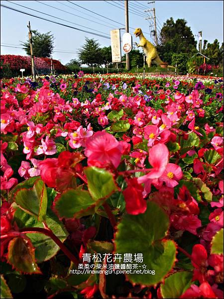 2011-1122-桃園-青松花卉農場 (18)