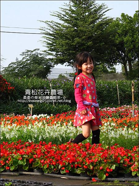 2011-1122-桃園-青松花卉農場 (19)