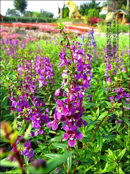 2011-1122-桃園-青松花卉農場 (21)