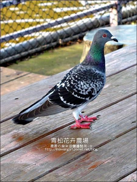 2011-1122-桃園-青松花卉農場 (23)