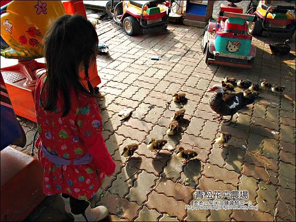 2011-1122-桃園-青松花卉農場 (25)