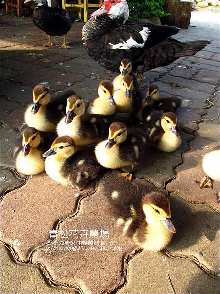 2011-1122-桃園-青松花卉農場 (26)