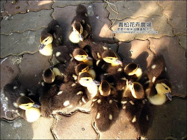 2011-1122-桃園-青松花卉農場 (27)