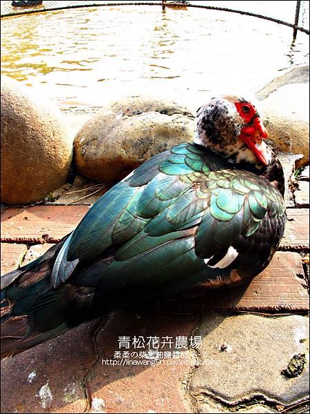 2011-1122-桃園-青松花卉農場 (31)