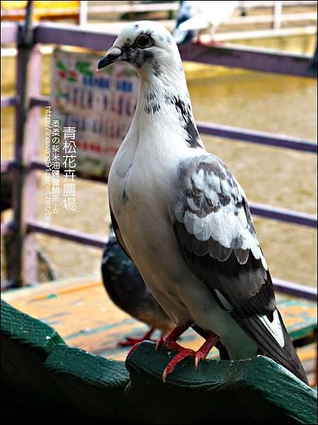 2011-1122-桃園-青松花卉農場 (37)