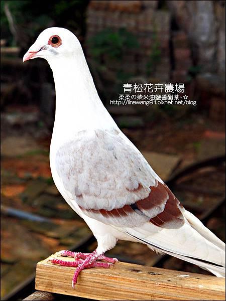 2011-1122-桃園-青松花卉農場 (39)