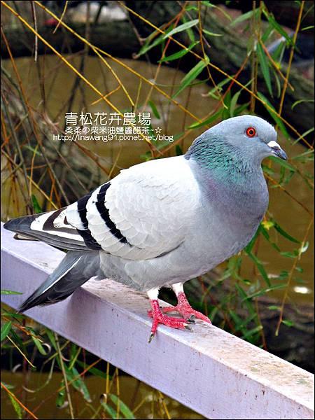 2011-1122-桃園-青松花卉農場 (40)