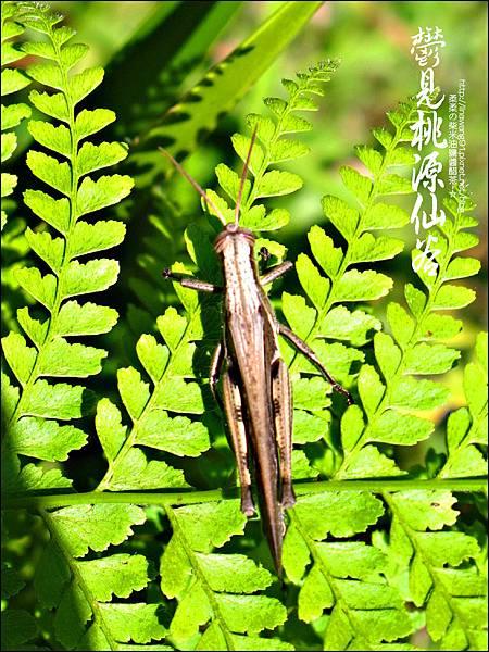 2012-0212-桃園-復興-桃源仙谷 (2)