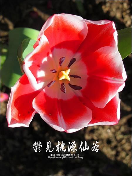 2012-0212-桃園-復興-桃源仙谷 (7)
