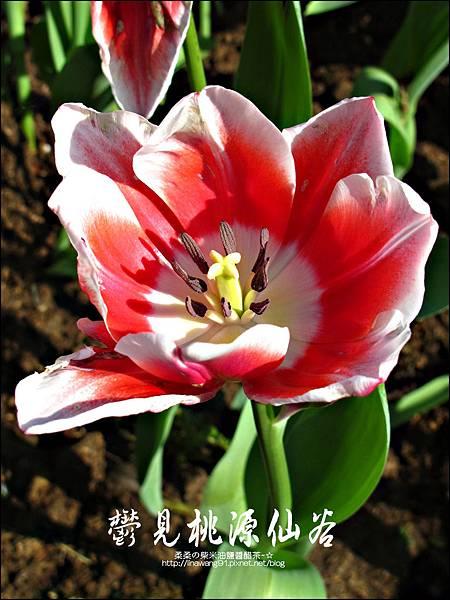 2012-0212-桃園-復興-桃源仙谷 (20)
