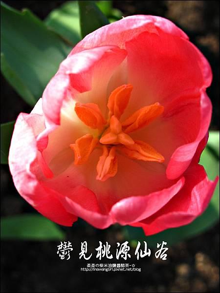 2012-0212-桃園-復興-桃源仙谷 (28)