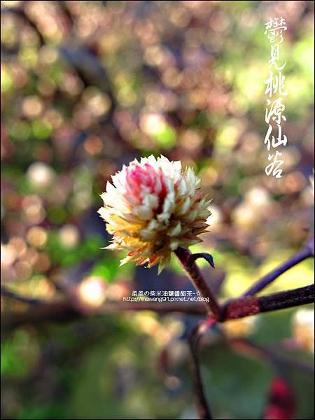 2012-0212-桃園-復興-桃源仙谷 (32)