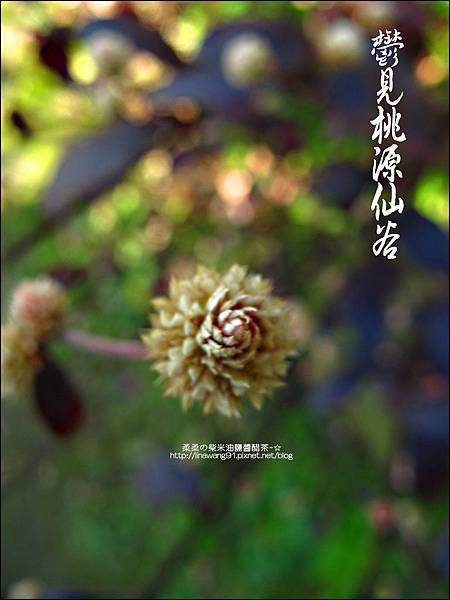 2012-0212-桃園-復興-桃源仙谷 (33)