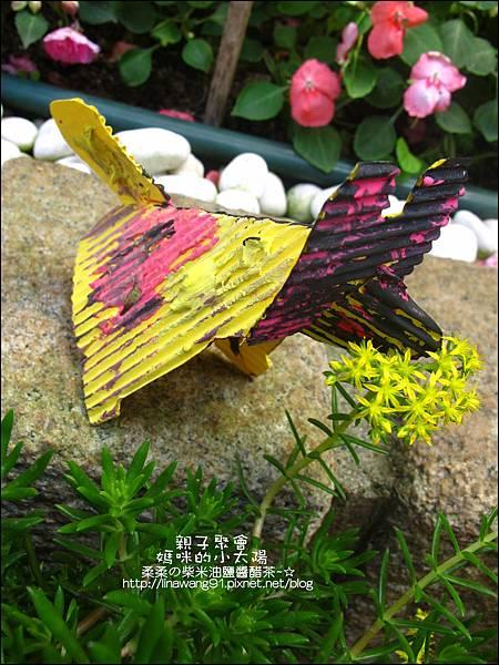 2011-0420-小太陽-日本-柴犬 (13)