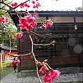 2012-0301-新竹麗池-蒲公英 (4)