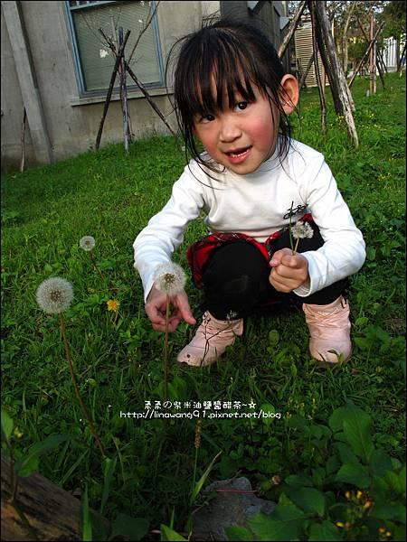2012-0301-新竹麗池-蒲公英 (9)