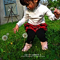 2012-0301-新竹麗池-蒲公英 (10)