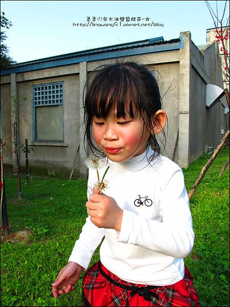2012-0301-新竹麗池-蒲公英 (12)