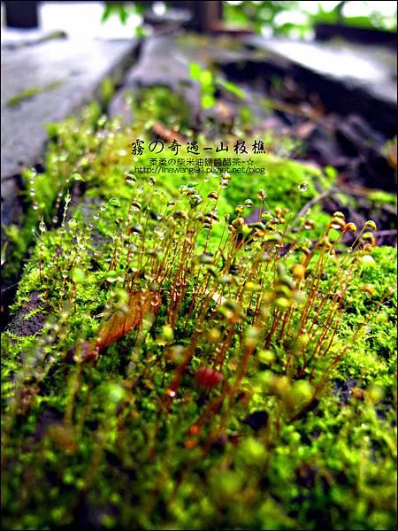 2012-0210-苗栗-三義-山板樵 (23)
