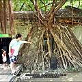 2011-0917-英商德記洋行-台南安平樹屋 (3)