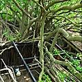 2011-0917-英商德記洋行-台南安平樹屋 (6)