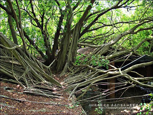 2011-0917-英商德記洋行-台南安平樹屋 (7)