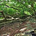 2011-0917-英商德記洋行-台南安平樹屋 (9)
