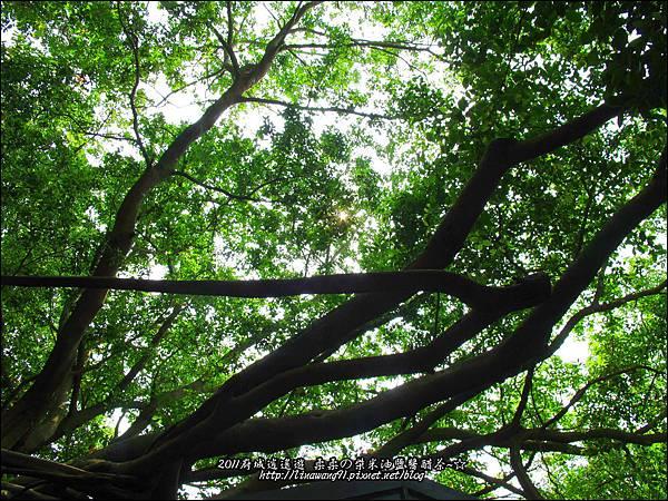 2011-0917-英商德記洋行-台南安平樹屋 (18)