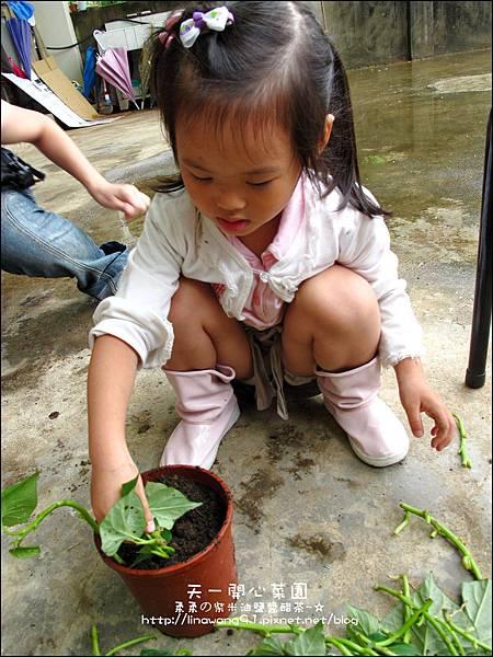 2012-0528-天一開心菜園-DIY蔬菜盆栽 (6)