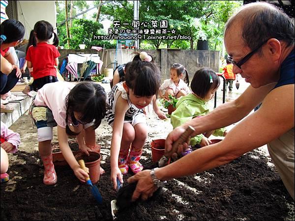 2012-0528-天一開心菜園-DIY蔬菜盆栽 (10)