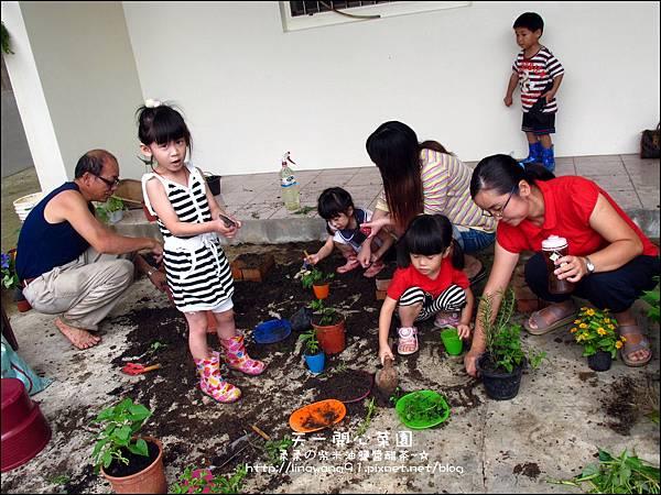 2012-0528-天一開心菜園-DIY蔬菜盆栽 (11)