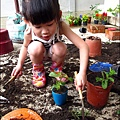 2012-0528-天一開心菜園-DIY蔬菜盆栽 (12)