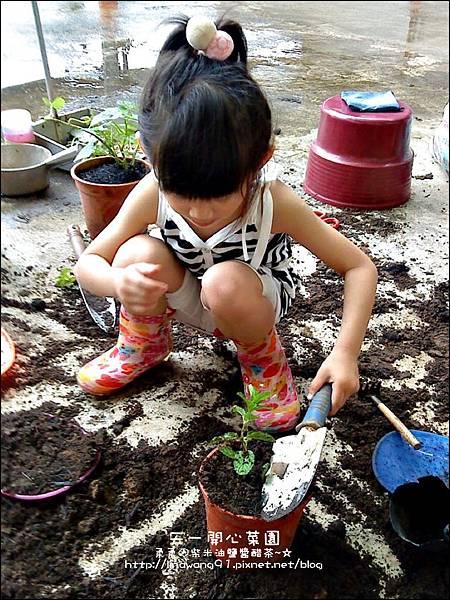 2012-0528-天一開心菜園-DIY蔬菜盆栽 (19)