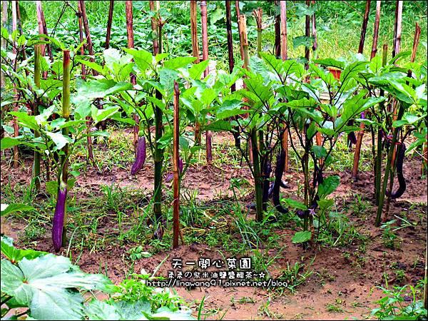 2012-0528-天一開心菜園-假日農夫體驗營 (1)