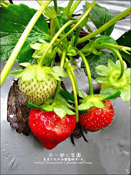 2012-0528-天一開心菜園-假日農夫體驗營 (2)
