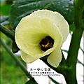2012-0528-天一開心菜園-假日農夫體驗營 (3)
