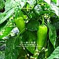 2012-0528-天一開心菜園-假日農夫體驗營 (5)