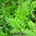 2012-0528-天一開心菜園-假日農夫體驗營 (6)