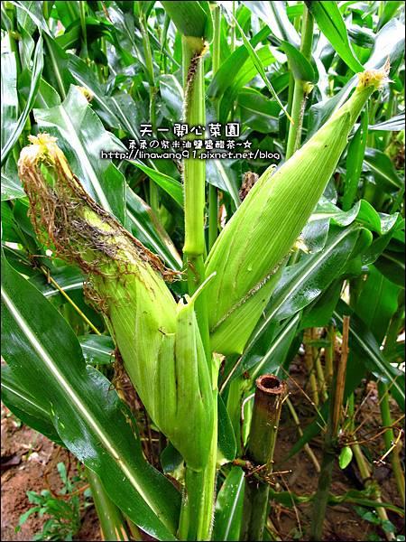 2012-0528-天一開心菜園-假日農夫體驗營 (7)
