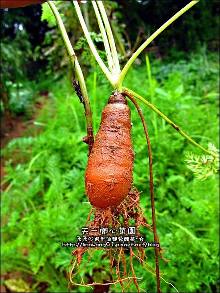 2012-0528-天一開心菜園-假日農夫體驗營 (9)
