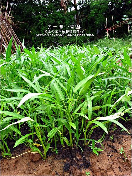2012-0528-天一開心菜園-假日農夫體驗營 (10)
