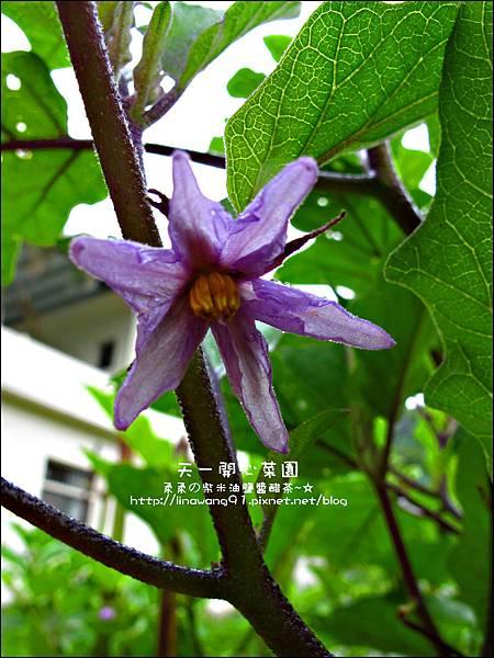 2012-0528-天一開心菜園-假日農夫體驗營 (12)