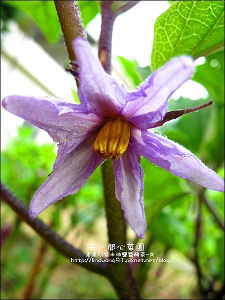 2012-0528-天一開心菜園-假日農夫體驗營 (13)