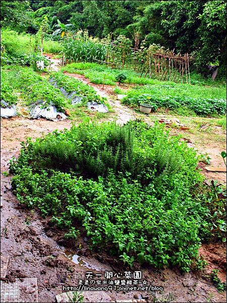 2012-0528-天一開心菜園-假日農夫體驗營 (18)
