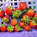 2012-0528-天一開心菜園-假日農夫體驗營 (28)